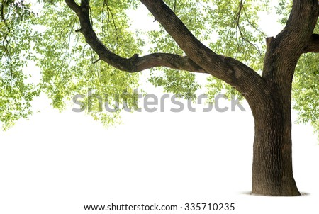 Tall trees isolated on white background #335710235