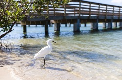 tall white bird with both legs in the water on a sandy beach with a bridge behind