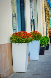 Tall white street vases with red flowers