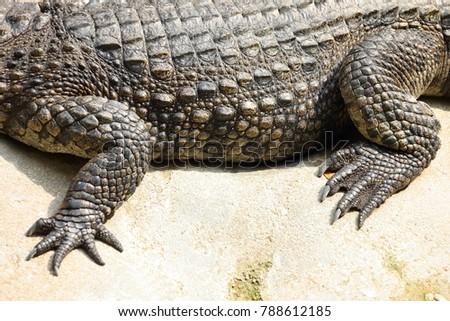 Shutterstock Talon and side skins of crocodile in tank