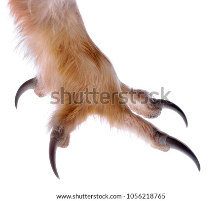 Talon of an Owl isolated on white.