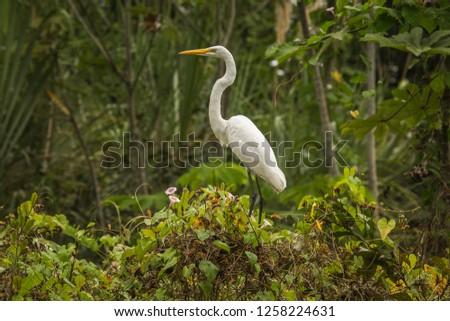Tambopata National Reserve Wildlife, Madre de Dios - Peru #1258224631