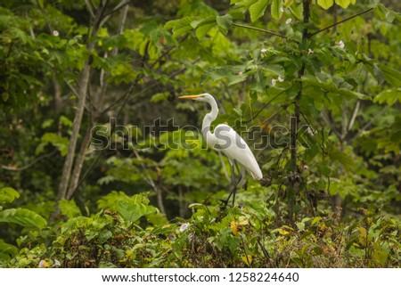 Tambopata National Reserve Wildlife, Madre de Dios - Peru #1258224640