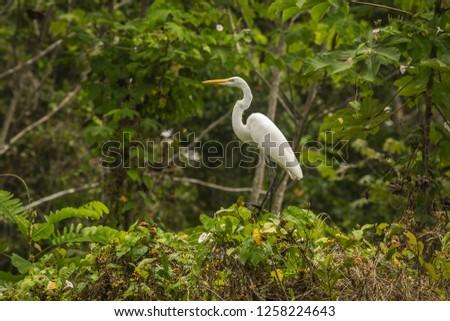 Tambopata National Reserve Wildlife, Madre de Dios - Peru #1258224643