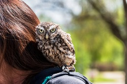 Tame owl sitting on a woman's shoulder