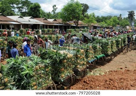 TANGAIL, BANGLADESH - JUNE 25, 2016: Pineapples stacked up in vans at a wholesale market at Jalchhatra in Madhupur, Tangail, Bangladesh on June 25, 2016. #797205028