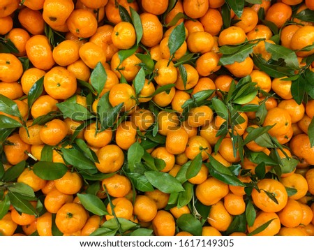 Tangerine fruits with green leaves closeup. Mandarines background. Closeup shot at the market. Mobile photo