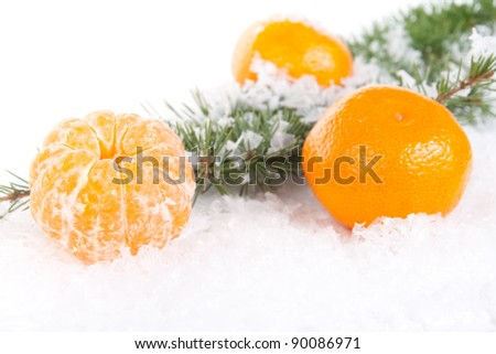 tangerines with a pine branch on snow background