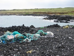 Tangled nets are found on a black rock beach. These nets while in the water pose a significant danger to marine life as, although lost and abandoned, they can continue ensnaring birds, turtles, fish