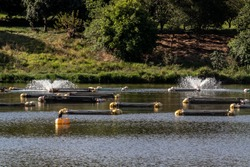 Tanks used for raising tilapia on a fish farm in Brazil