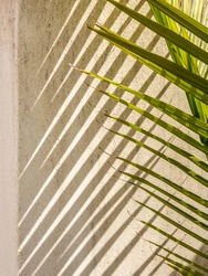 Tapered ends of palmetto fronds by exterior concrete wall with crisscrossing diagonal pattern of palmetto shadows on a sunny morning in Florida, for tropical, garden, and landscaping motifs