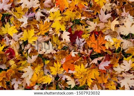 Tapis de feuilles au sol pendant l'automne Photo stock ©