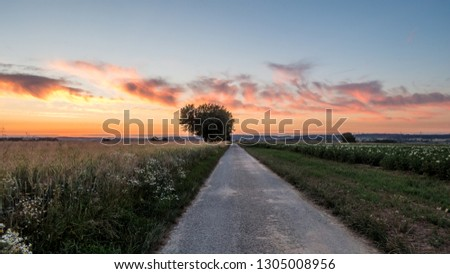 Tar road dirt road #1305008956
