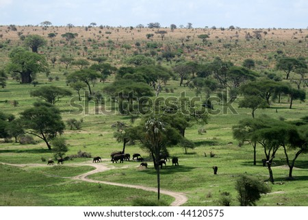 Tarangire National Park - Wildlife Reserve in Tanzania, Africa