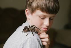 Tarantula crawls on shoulder of frightened child. boy catches spider. Arachnophobia. Phobia concept