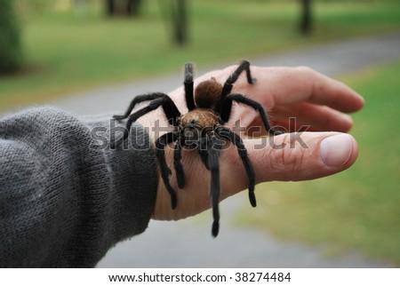 Tarantula Hand