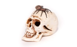 Tarantula spider on artificial human skull closeup isolated on white background. The concept of fear and horror, Halloween holiday.