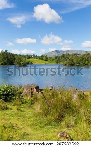 Tarn Hows near Hawkshead Lake District National Park England uk on a beautiful sunny summer day with no rain!