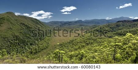 Tasmania rain forest and a heart shape