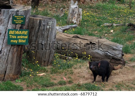 Tasmanian Devil and Sign