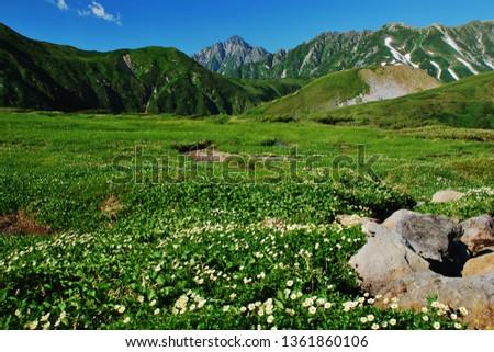 Tateyama alpine ~ alpine flowers #1361860106