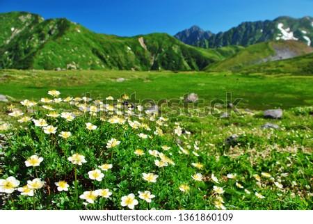 Tateyama alpine ~ alpine flowers #1361860109