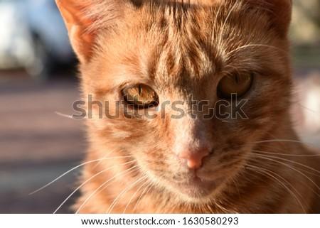 tatlı bir kedi fotoğrafı biraz da vahşi Stok fotoğraf ©
