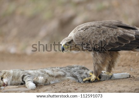 http://image.shutterstock.com/display_pic_with_logo/1232930/112591073/stock-photo-tawny-eagle-and-african-wild-cat-112591073.jpg