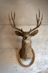 Taxidermy animal of deer head with classic frame interior on the old rotten brick wall building decoration. Concept vintage style.