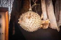 Taxidermy blow fish as decoration