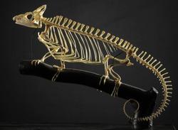Taxidermy Chameleon Skeleton