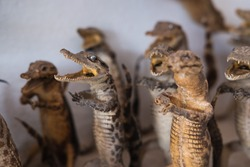 Taxidermy of young crocodiles in a shop in Siem Reap, Cambodia.