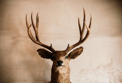 Taxidermy Stuffed wild Elk deer head on old grungy concrete wall dark tone image huanted dead animal concept