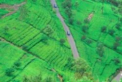 Tea estate in Sri Lanka. View from Lipton Seat Road