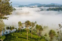 Tea Estates in the morning mist, Haputale, Uva Province, Southern Highlands, Sri Lanka