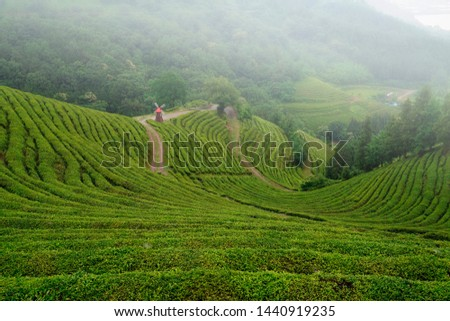 Tea fields in the slopes of the slopes #1440919235