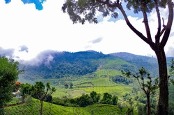 Tea Gardens of Coonoor near Ooty, the hill station in Nilgiris District of Southern Indian state of Tamil Nadu..