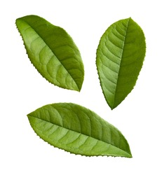Tea Leaves isolated on a white background