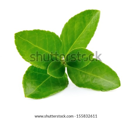 Tea leaves on a white background  #155832611