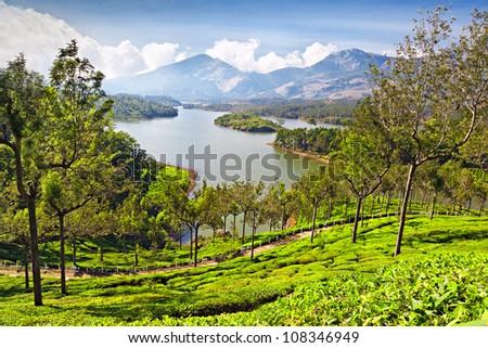 Tea plantation in Munnar, India - stock photo