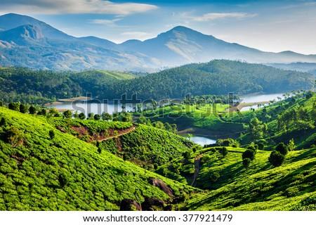 Tea plantations and Muthirappuzhayar River in hills near Munnar, Kerala, India #377921479