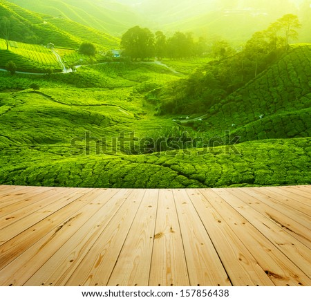 Tea Plantations at Cameron Highlands Malaysia wood floor perspective Sunrise in early morning with fog