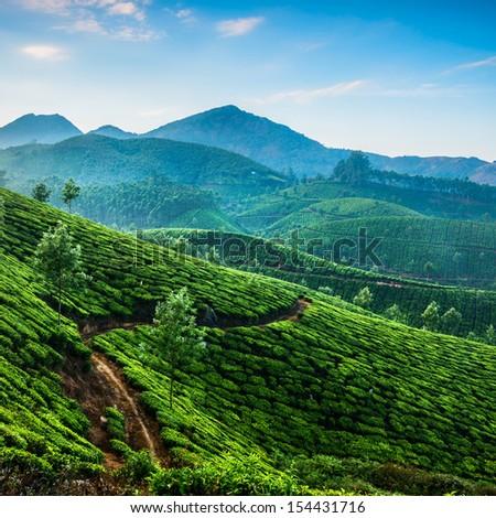 India. Tea plantation