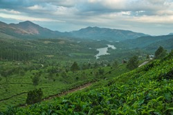 Tea Plantations in the hills