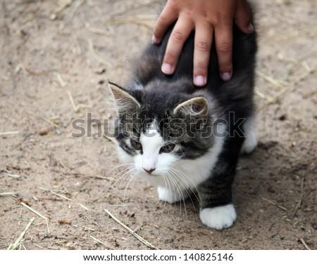 Teach children to love animals