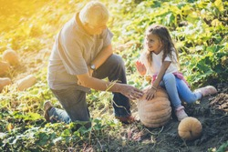 Teach them from the small what is healthy. Grandfather and granddaughter in the field with pumpkins. Copy space.