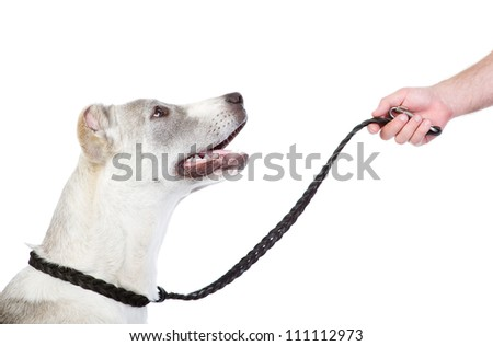 Teaching a dog. isolated on white background