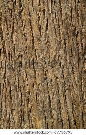 teak tree texture