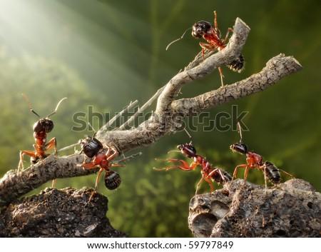 team of ants breaking down dead tree #59797849