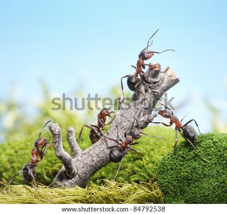 team of ants breaking down weathered tree, teamwork concept - stock photo